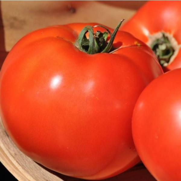 Big Beef Tomato Seeds