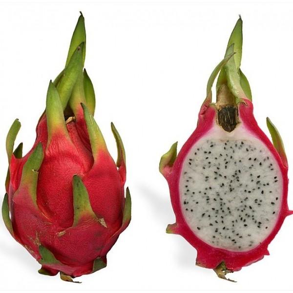 Dragon Fruit Seeds (Hylocereus undatus)