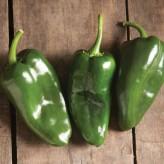 Bastan Pepper Seeds