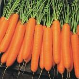 Napoli Carrot Seeds *ORGANIC*