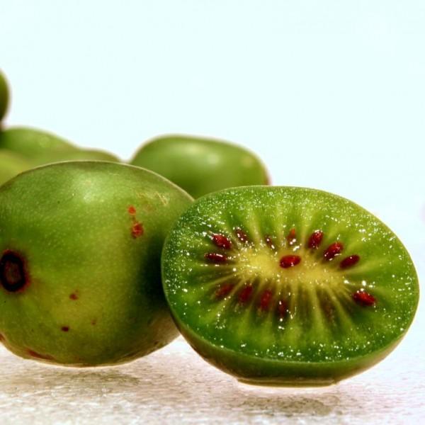 Hardy Kiwi (Actinidia arguta)