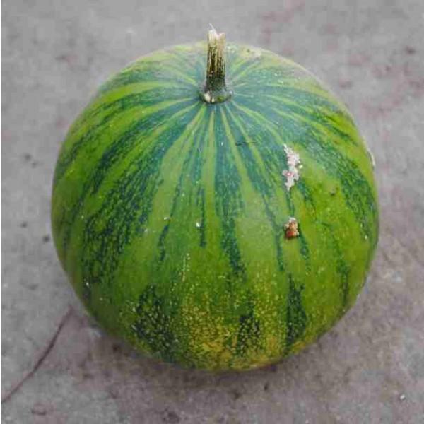 Cucurbita Ecuadorensis Seeds