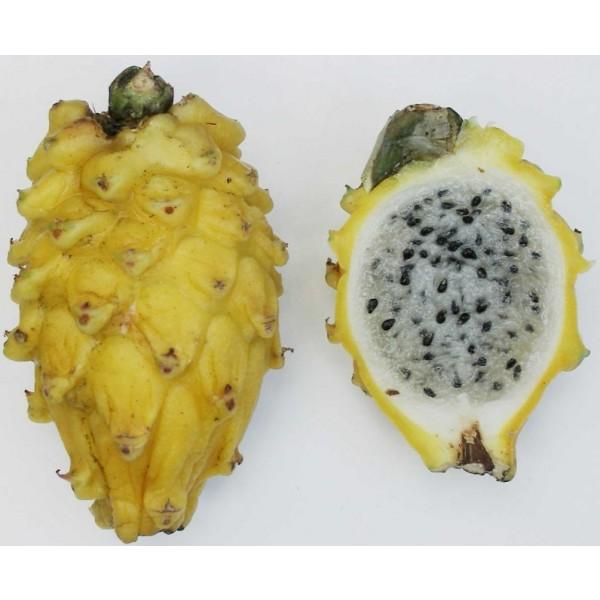 Selenicereus Megalanthus Seeds (Yellow Pitaya Seeds, Dragon Fruit Seeds)
