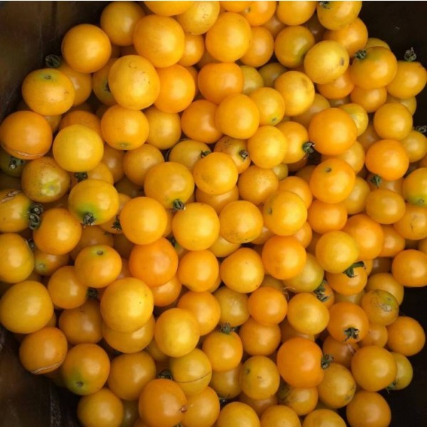 Galina Round Yellow Cherry Tomato Seeds