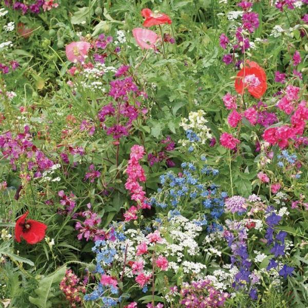 Wildflower Seeds Mix  : Shade Flowers Seeds