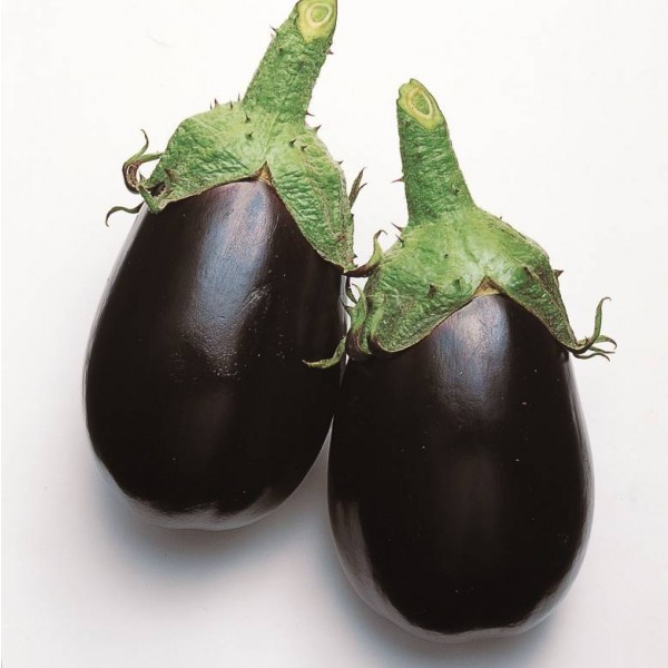 Graines Aubergine Black King