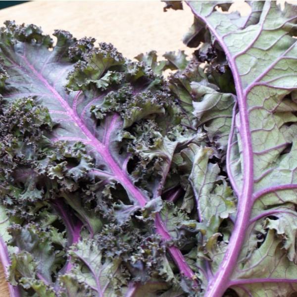 Graines Kale