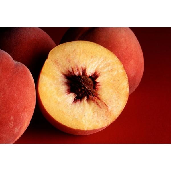 Graines Prunus Persica(Graines Pêcher)