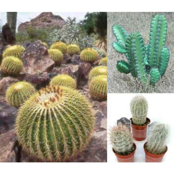 Graines Cactus (En Mélange)