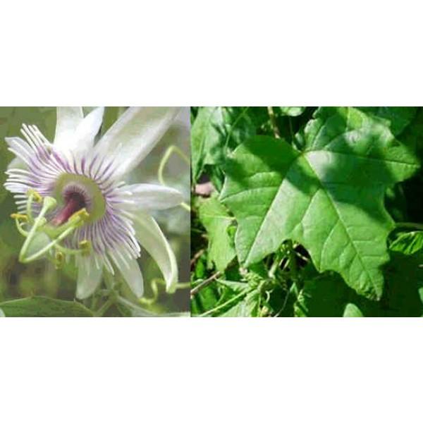 Passiflora Morifolia (Fruit de la Passion, Fleur de la Passion)