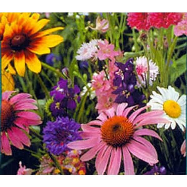 Graines Fleurs Sauvages (Graines Fleurs pour Papillons) (Graines en Mélange)