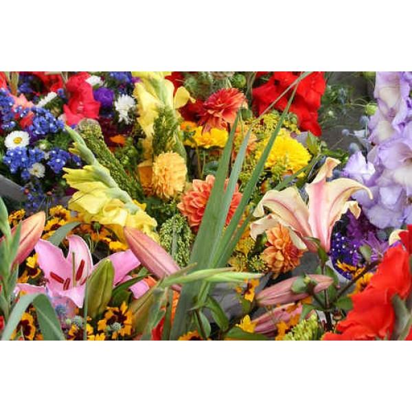 Fleurs Sauvages (Plantes pour Fleurs Coupées)
