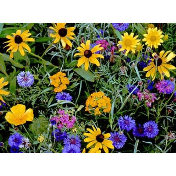 Graines Fleurs Sauvages : Montagne (Mélange de Graines de Fleurs de Montagnes, Amérique)