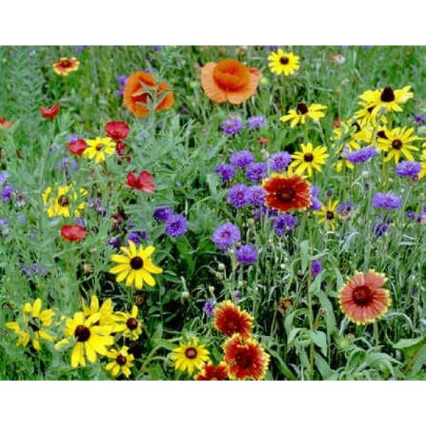 Graines Fleurs Sauvages : Nord Est Américain (Mélange de Graines Fleurs Nord-Est, Amérique)