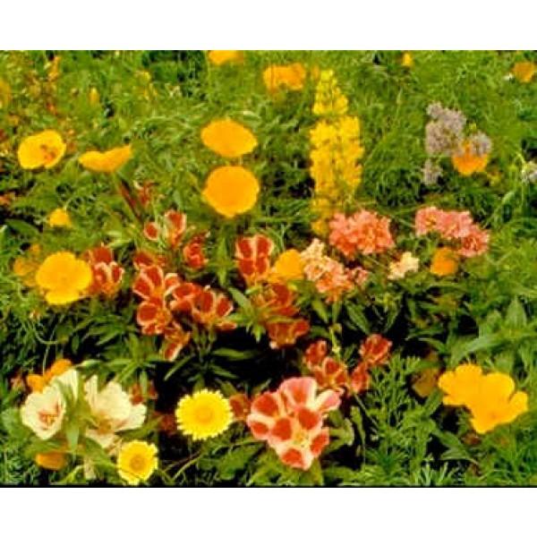 Graines Fleurs Sauvages : Pacifique (Mélange de Graines de Fleurs du Pacifique Nord-Ouest, Amérique)
