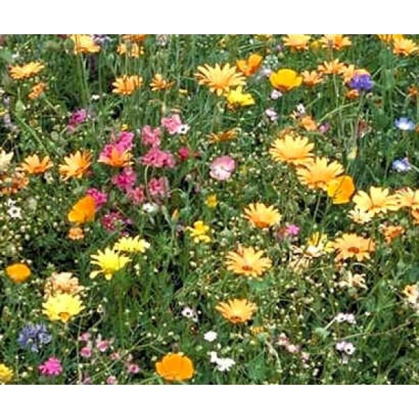 Graines Fleurs Sauvages : Californie (Mélange de Graines de Fleurs de Californie, Sud-Ouest, Amérique)