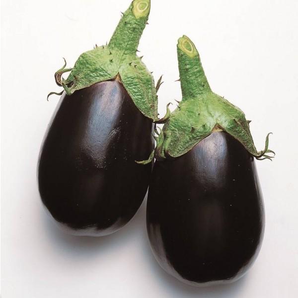 Graines Aubergine Black King