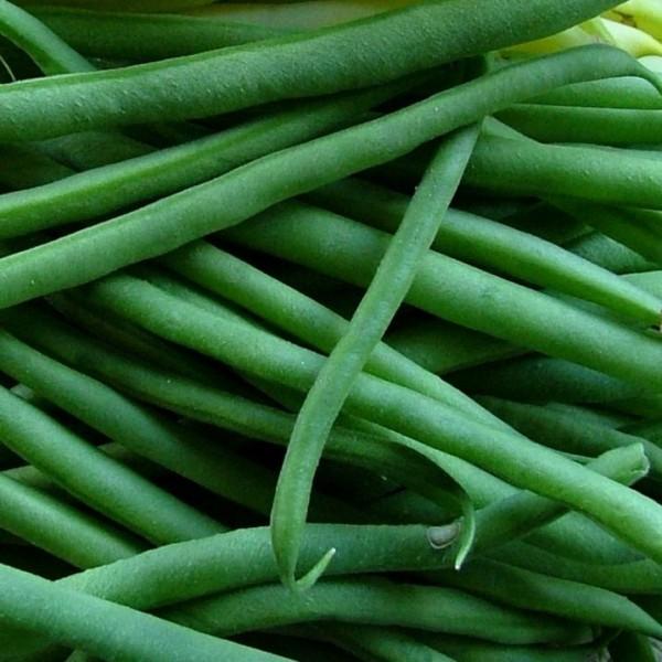 Graines Haricot Vert Jade